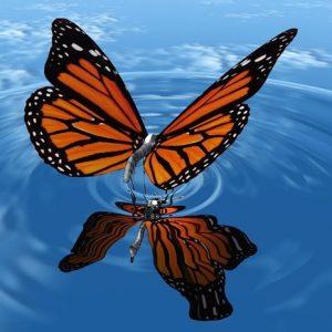 Pillangó fotók
