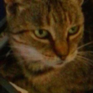 Házi macska fotók