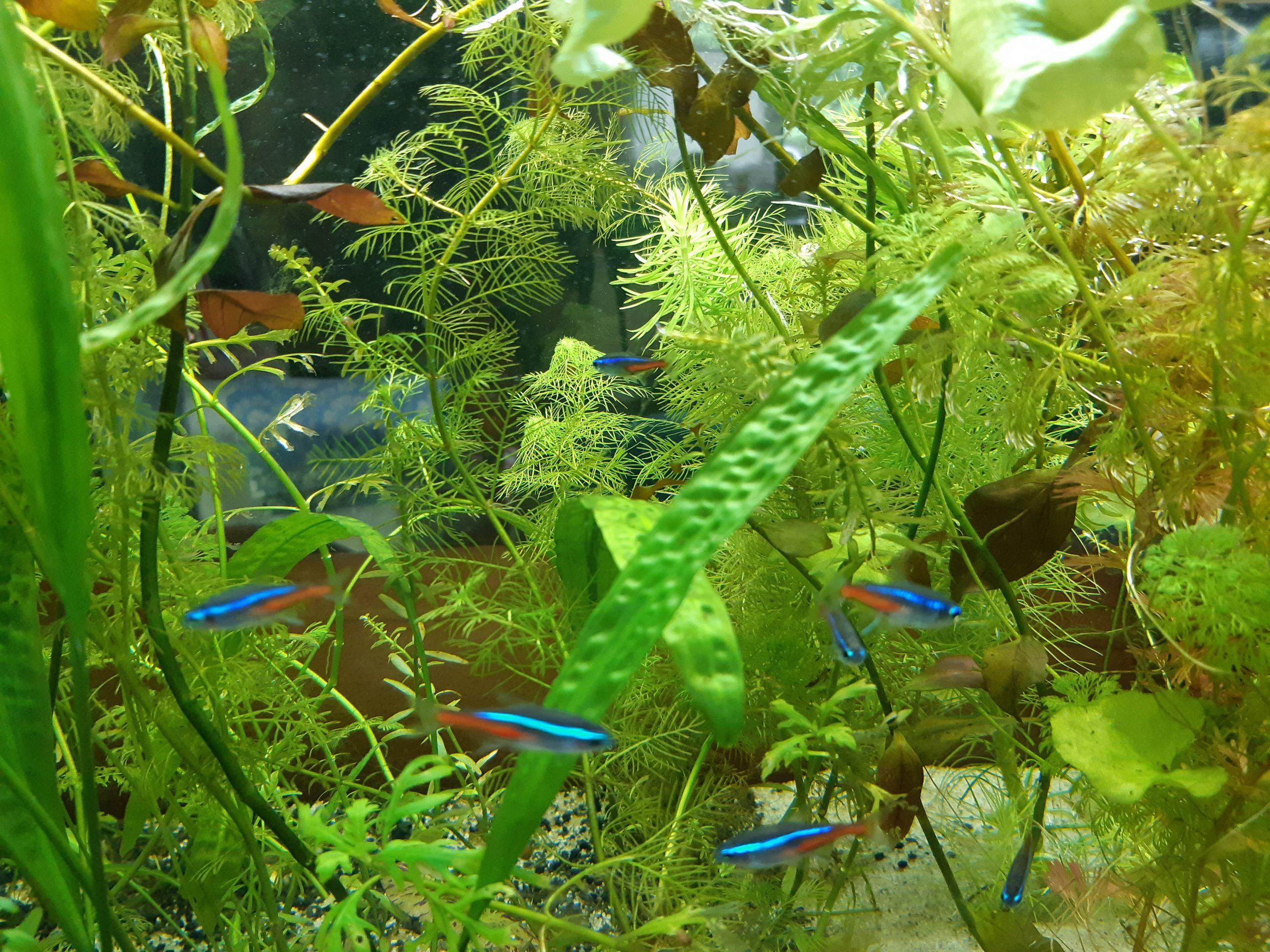 A halak a teljes nyugodság szimbólumai fotók