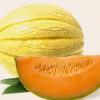 Sárgadinnye fotók